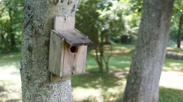 Birdhouse along the Etowah Nature Trail